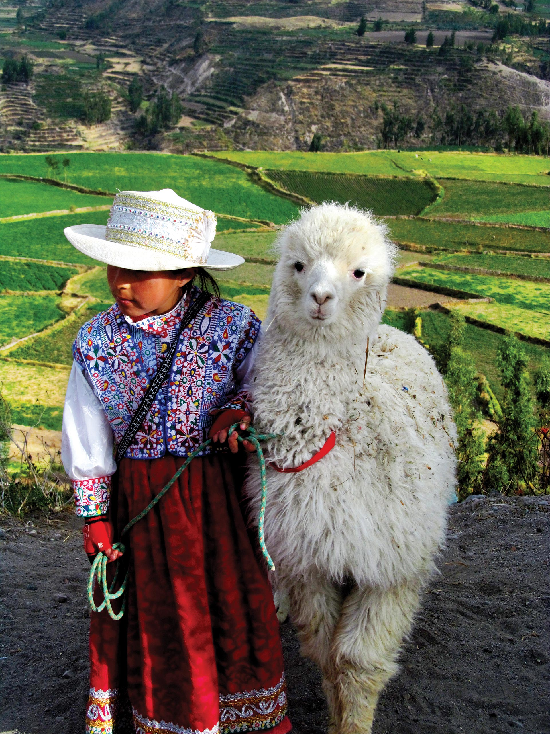 http://infromtheoutpost.com Many Andean families own llamas