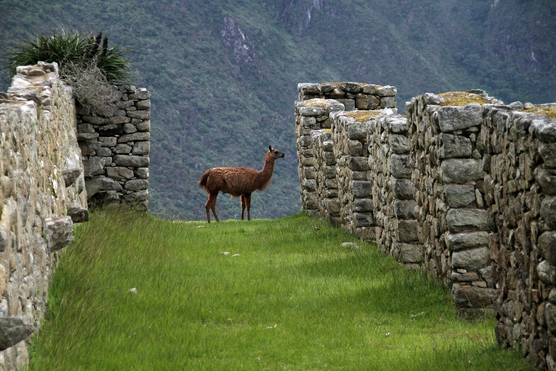Andes llamas, alpacas and horses, and Mountain Lodges of Peru http://infromtheoutpost.com