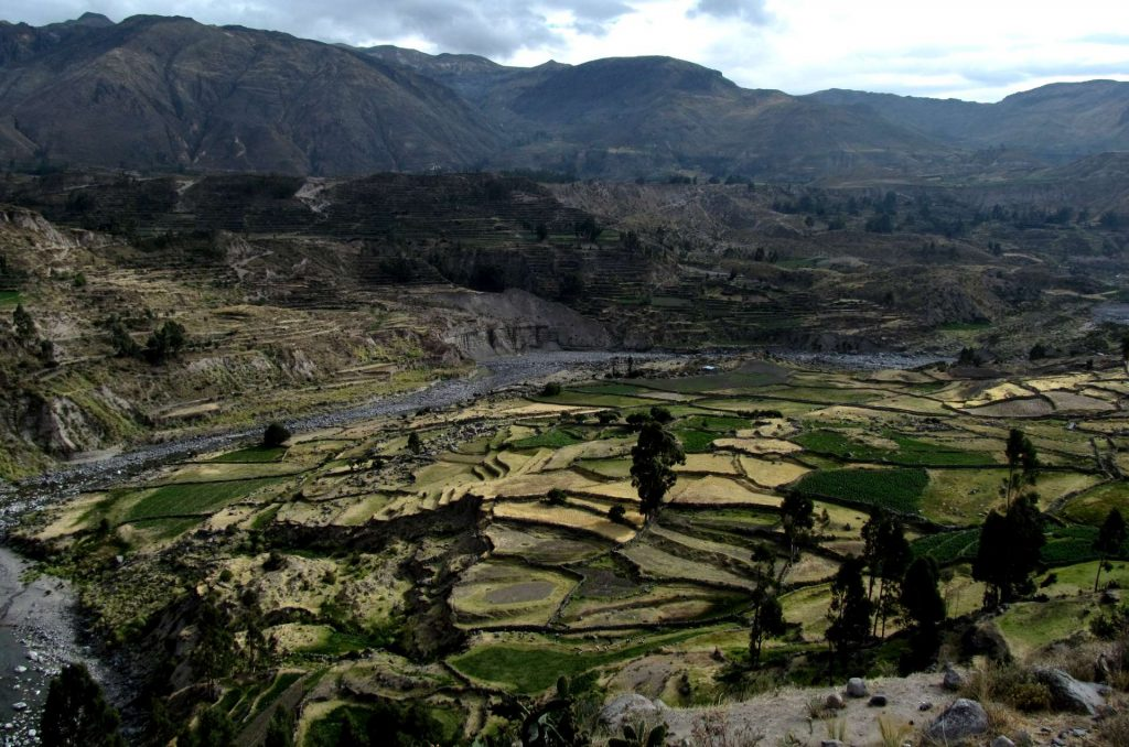 The Inca Terraces of the Andes